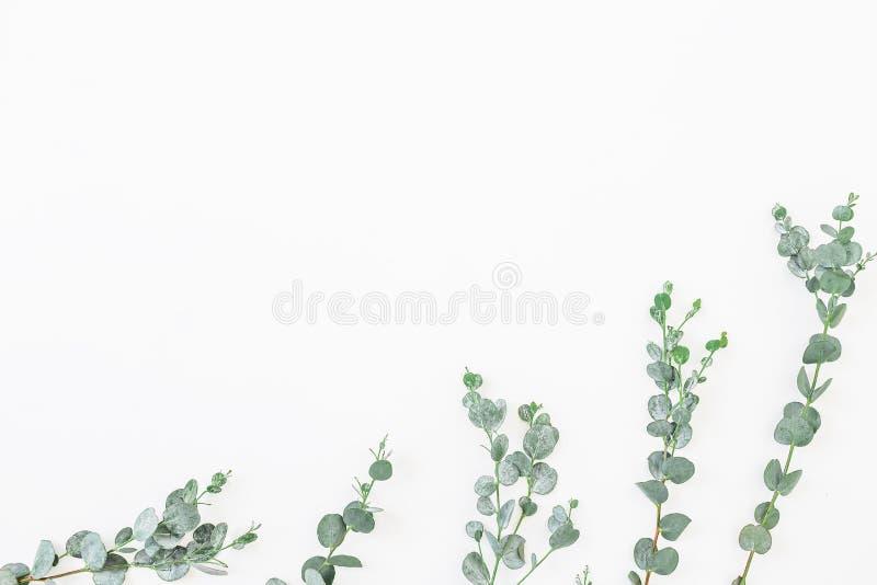 玉树叶子的花卉样式在白色背景隔绝的 平的位置,顶视图 免版税库存照片