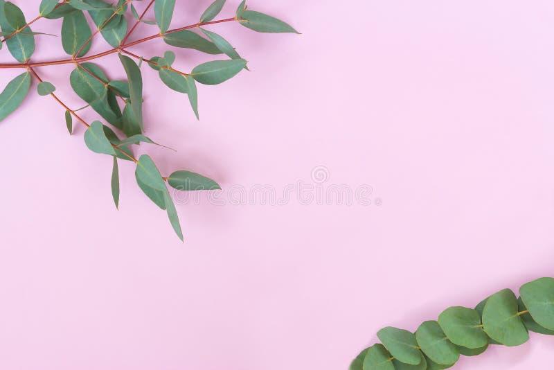 玉树在浅粉红色的背景离开 框架由玉树分支做成 平的位置,顶视图 免版税库存照片