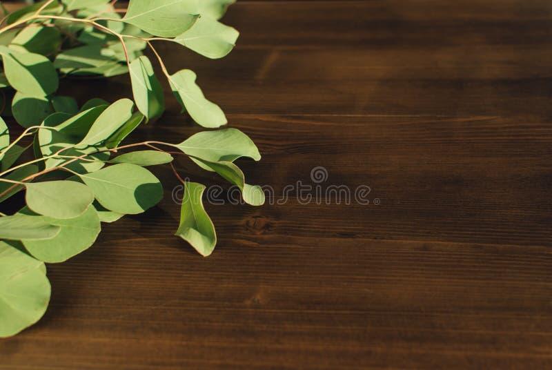 玉树小树枝木表面上的 免版税图库摄影