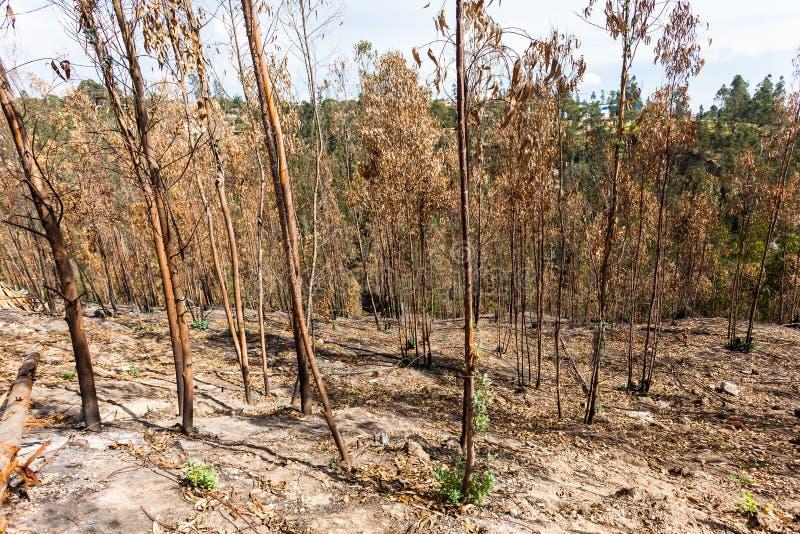 玉树森林发芽 库存图片