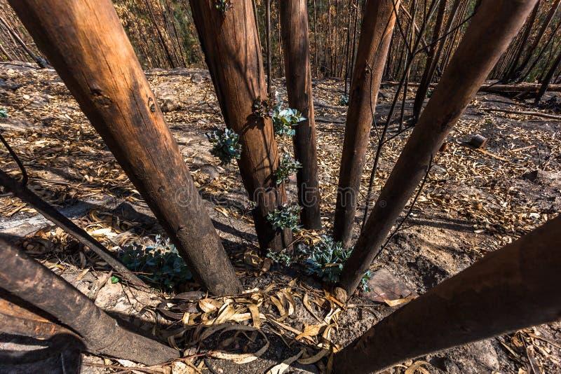 玉树森林发芽 库存照片