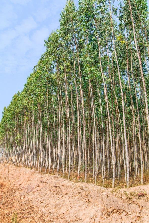玉树森林 免版税图库摄影