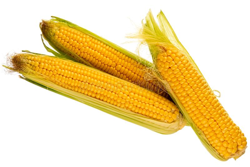 玉米三个新鲜的玉米棒  免版税库存照片