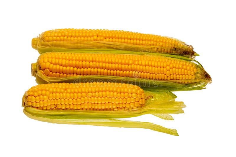 玉米三个新鲜的玉米棒  免版税库存图片