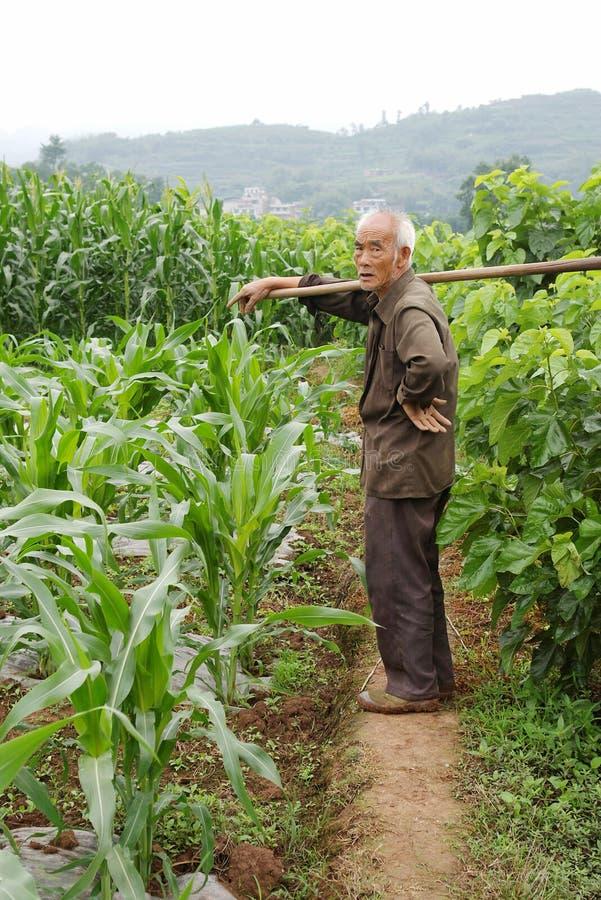 玉米农夫 库存照片