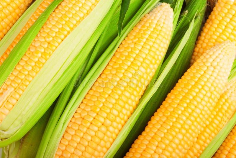 玉米叶子 图库摄影