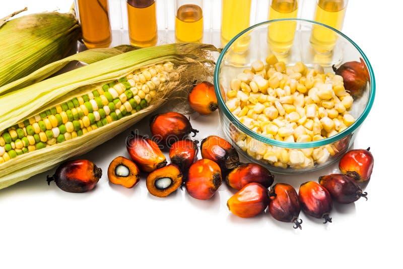 玉米和油棕榈树引起了在试管的对氨基苯甲酸二,有生物燃料的 库存照片