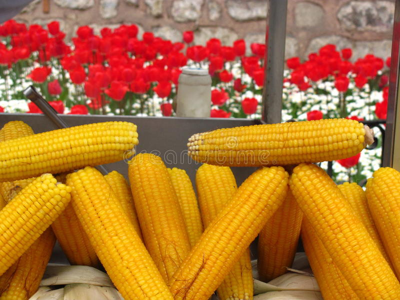 玉米和郁金香在伊斯坦布尔 免版税图库摄影