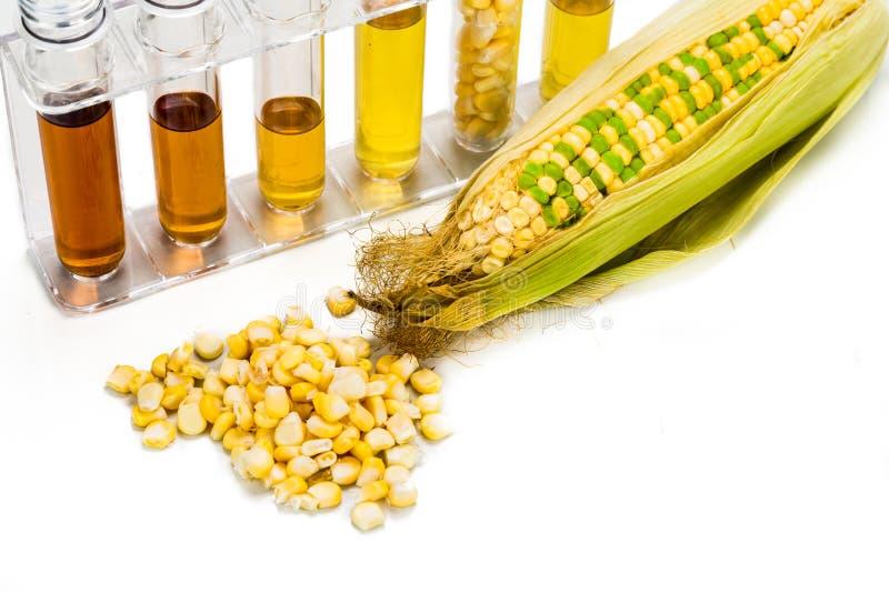玉米在玉米引起了在试管的对氨基苯甲酸二,有生物燃料的 库存照片
