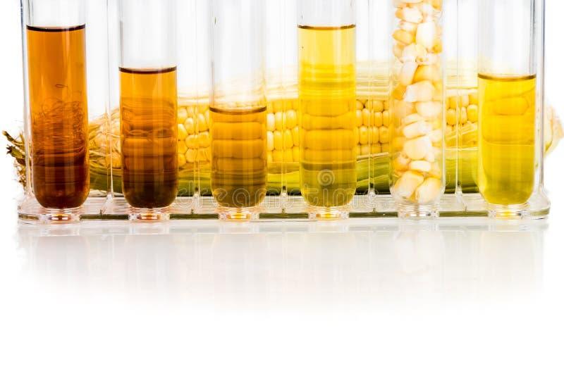 玉米在白色backgrou引起了与试管的对氨基苯甲酸二生物燃料 图库摄影