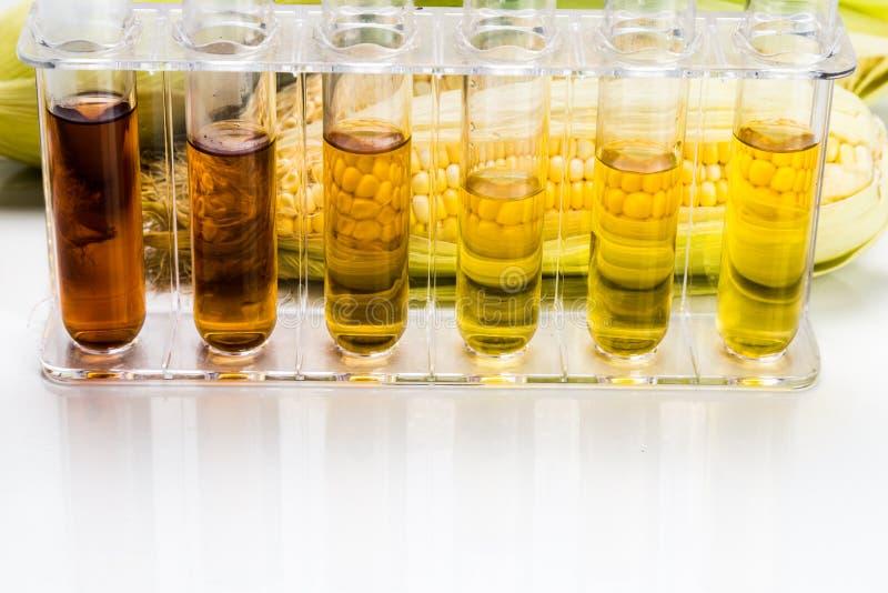 玉米在白色backgrou引起了与试管的对氨基苯甲酸二生物燃料 库存照片