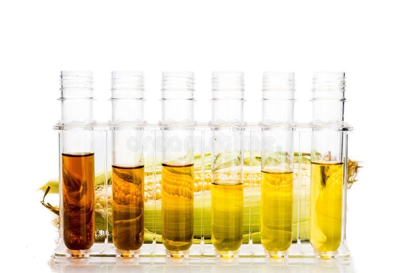 玉米在白色backgrou引起了与试管的对氨基苯甲酸二生物燃料 免版税库存图片