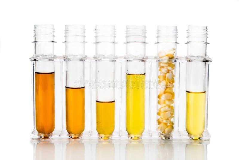 玉米在白色backgrou引起了与试管的对氨基苯甲酸二生物燃料 免版税库存照片