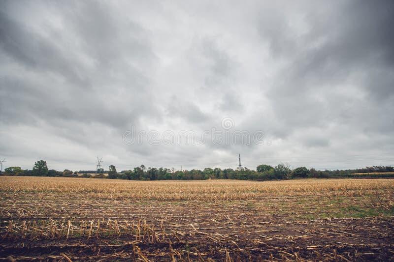 玉米在秋天的一个领域播种 免版税库存照片