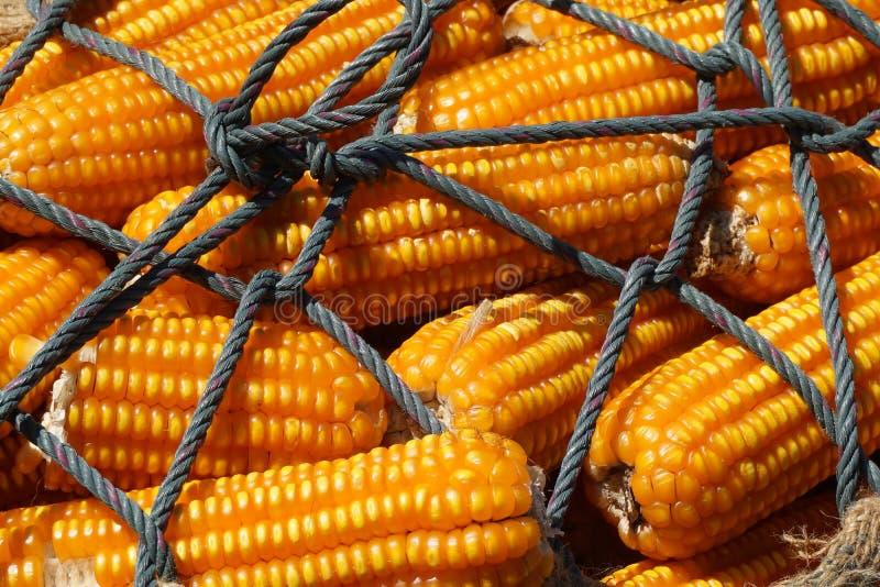 玉米干燥域 免版税库存照片