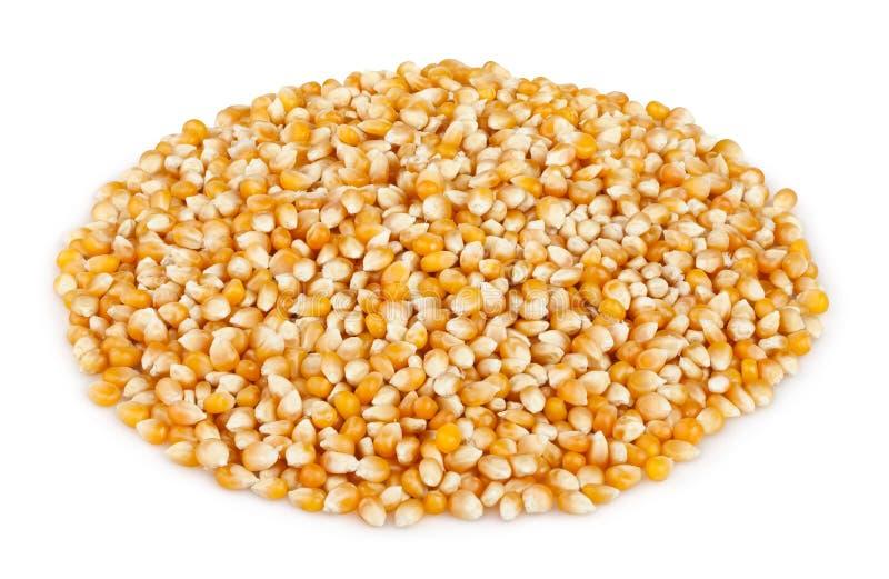玉米干燥仁堆 免版税库存图片