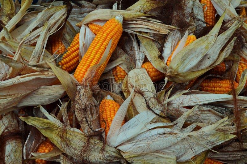 玉米待售 免版税库存照片