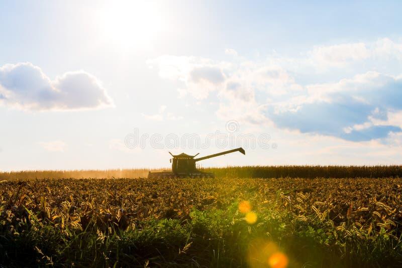 玉米收割机剪影 库存照片