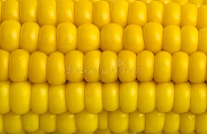 玉米新宏指令 免版税库存照片