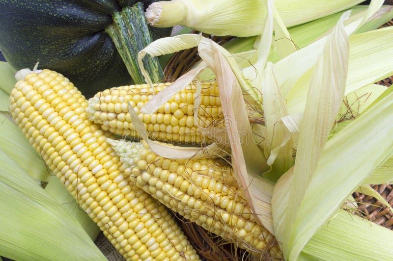 玉米新黄色 图库摄影