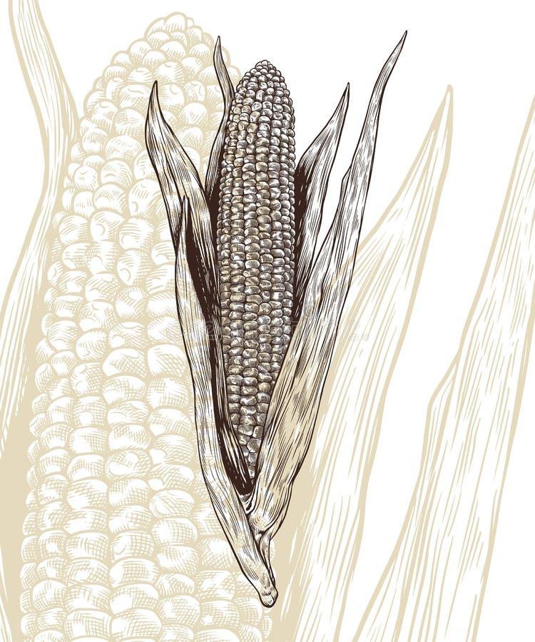玉米板刻传染媒介例证 免版税库存照片