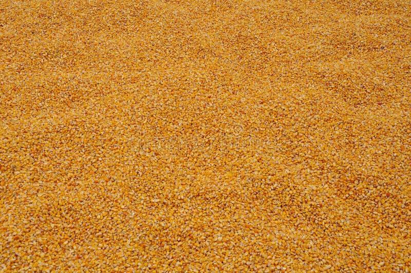 玉米核心 图库摄影