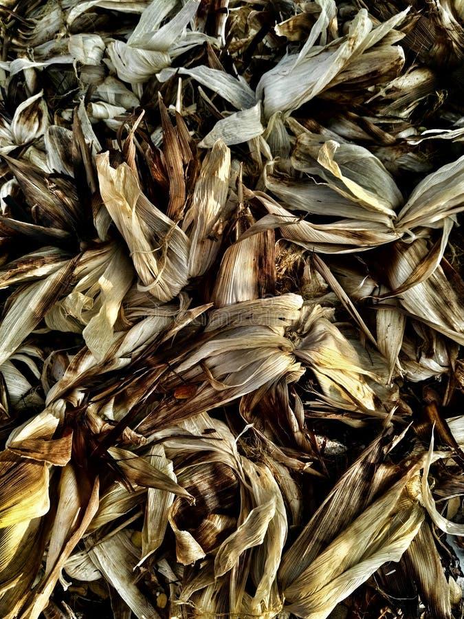 玉米棒子堆 库存照片