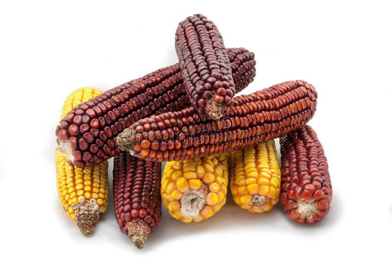 玉米棒子 免版税图库摄影