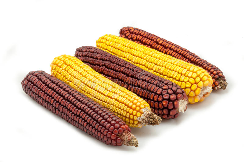 玉米棒子 免版税库存照片
