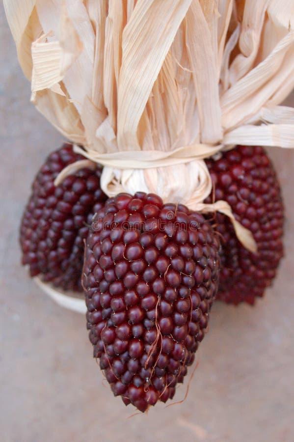 玉米棒玉米红色 免版税图库摄影