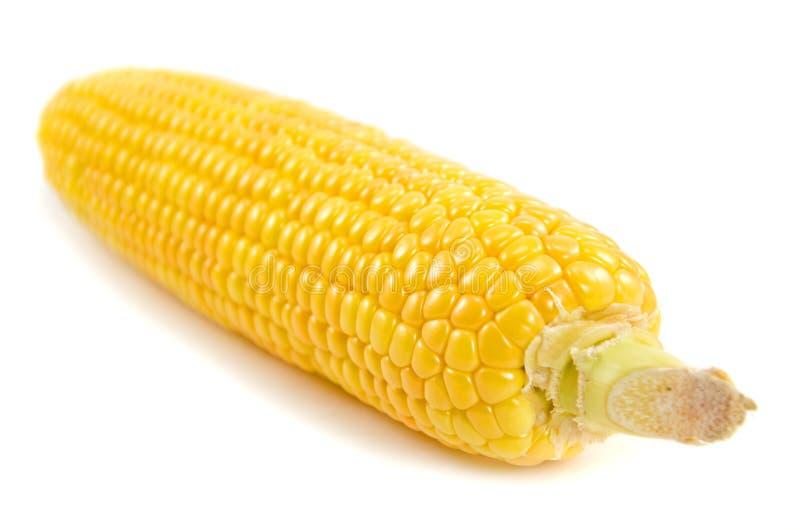 Download 玉米棒玉米 库存图片. 图片 包括有 营养, 耳朵, 核心, 食物, 果壳, 成熟, 空白, 绿色, 蔬菜 - 22357413