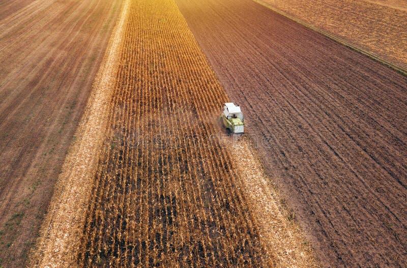 玉米玉米收获,联合收割机鸟瞰图  免版税图库摄影