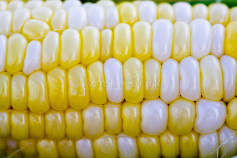 玉米甜点 免版税库存照片
