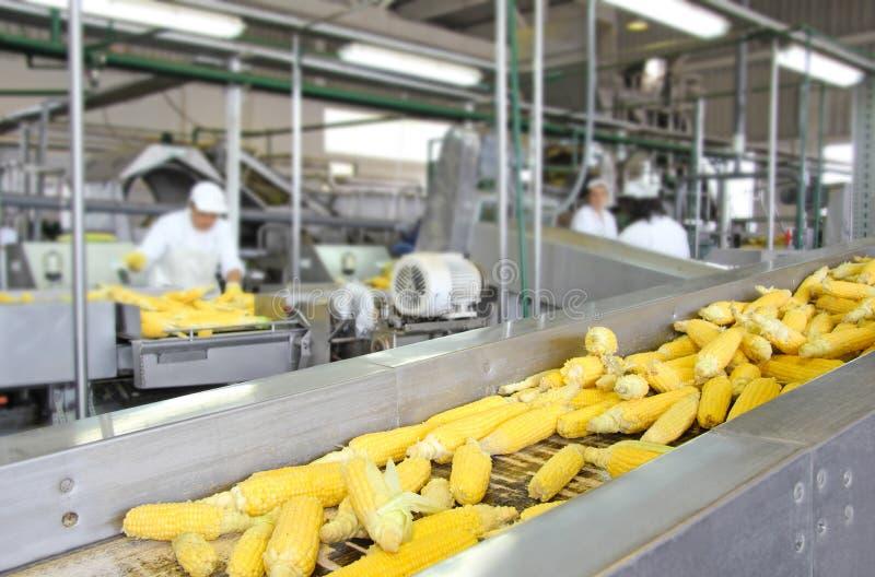 玉米生产 免版税库存图片