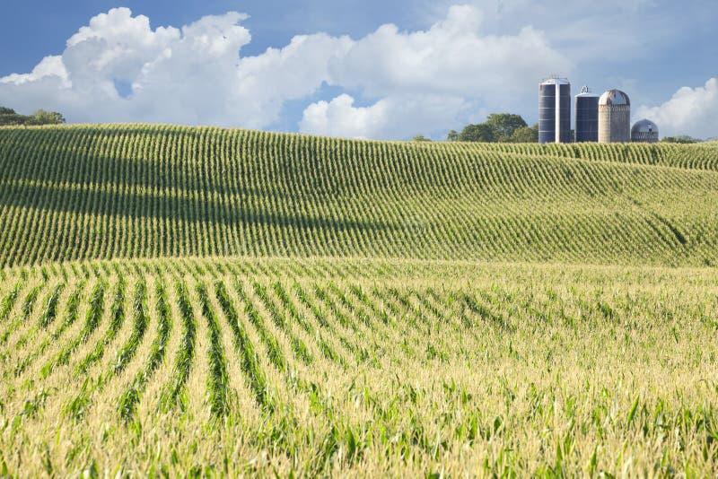 玉米田和筒仓在与云彩的晴天 免版税库存照片