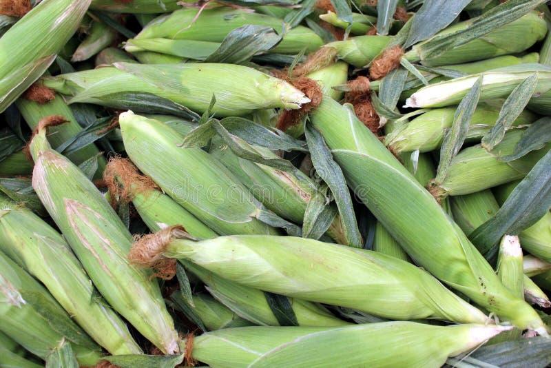 玉米穗 免版税库存照片