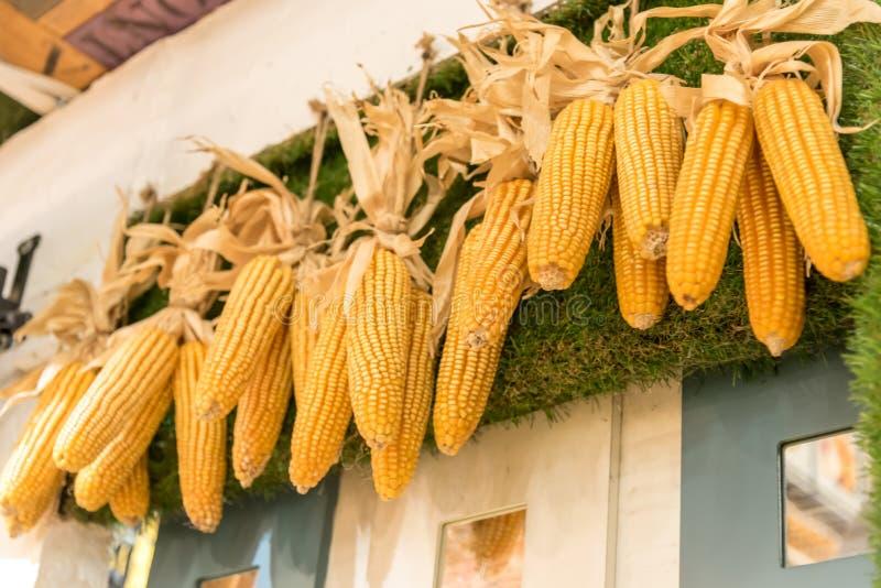 玉米茎 免版税库存照片