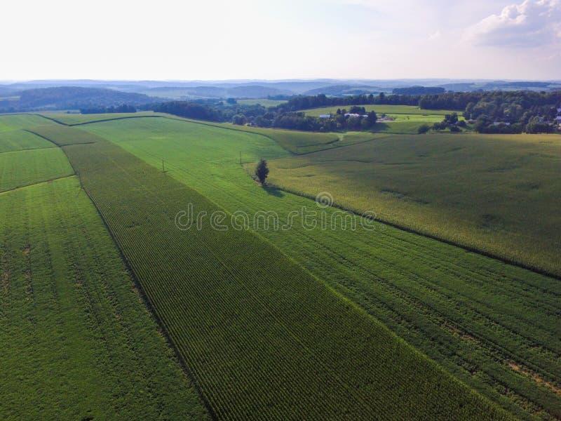 玉米行在农田的在一个南部的约克县镇Shrewsbu 免版税库存照片