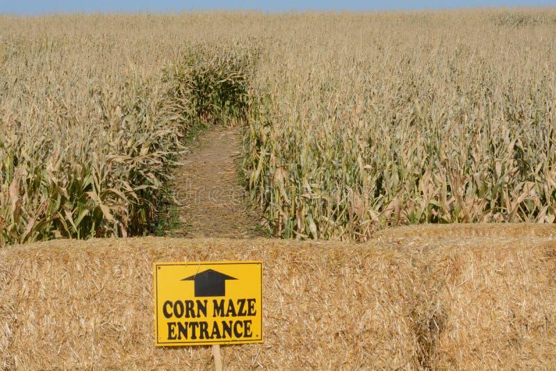 玉米迷宫 免版税库存图片