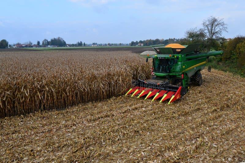 玉米,玉米收获  库存照片