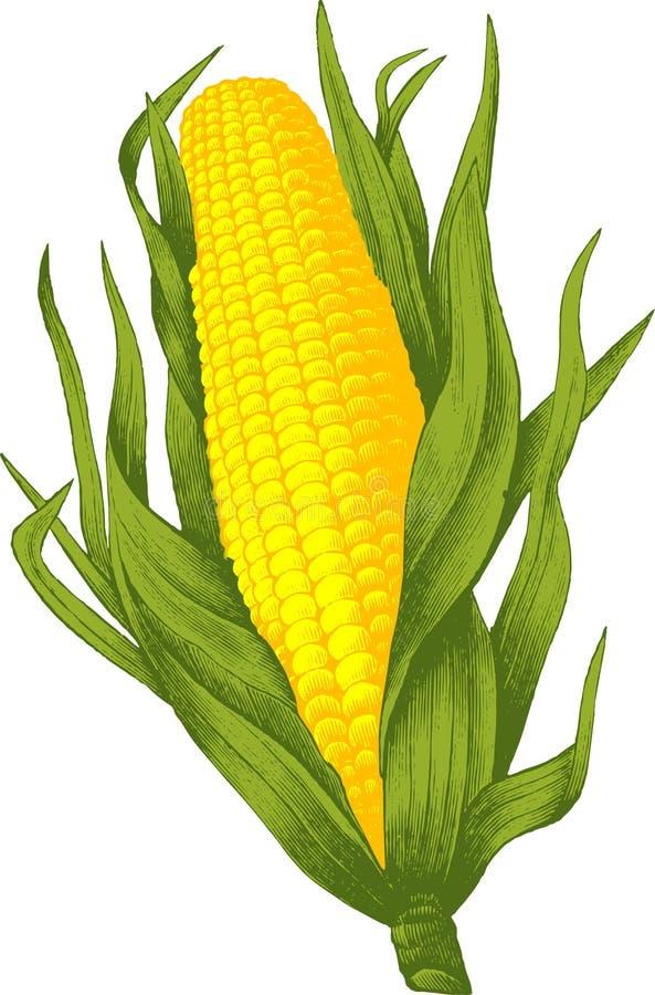 玉米 库存例证