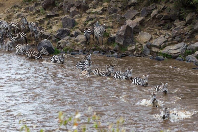 玛拉河在肯尼亚 从马塞语玛拉的斑马对塞伦盖蒂,非洲 免版税库存照片