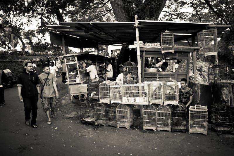 玛琅,印度尼西亚鸟市场的人们  免版税库存图片