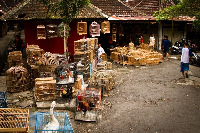 玛琅,印度尼西亚鸟市场的场面  免版税库存照片