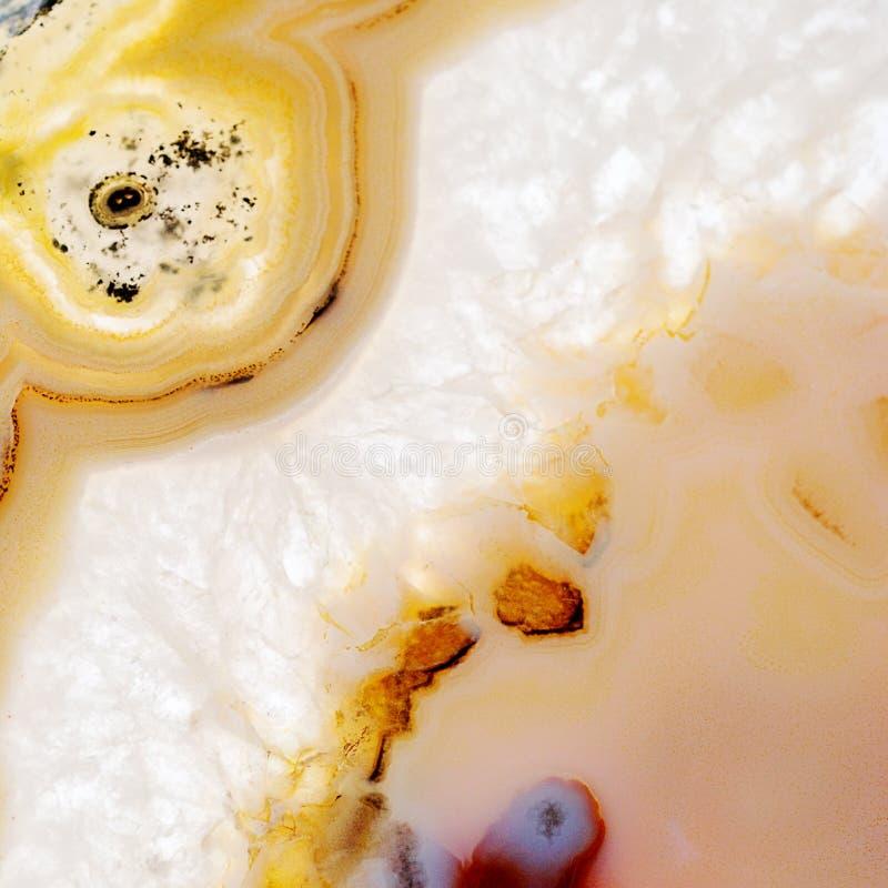 玛瑙的芽 库存图片