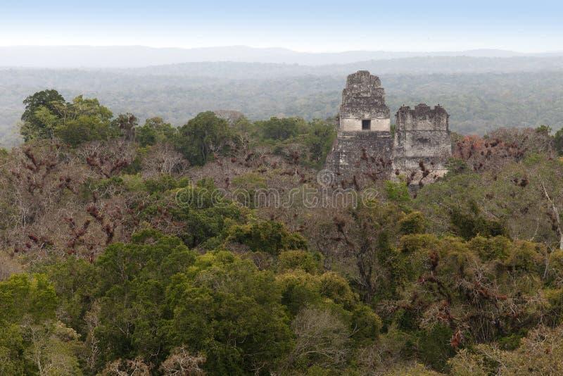 玛雅废墟在密林Tikal 免版税图库摄影