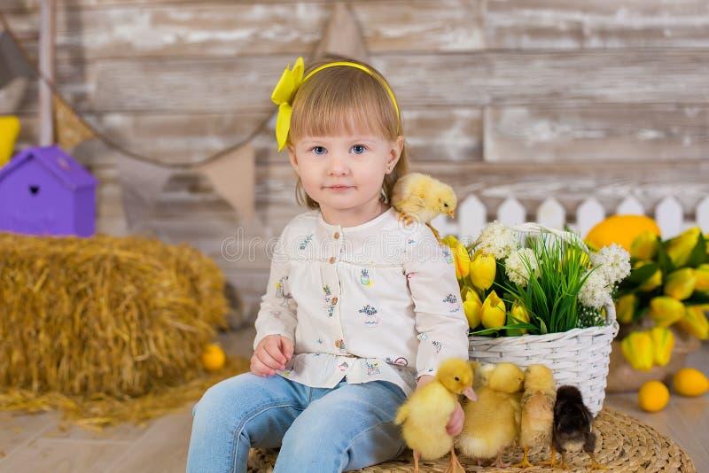 玩与鸡的牛仔裤和白色女衬衫的逗人喜爱的女孩捉迷藏坐在接近黄色鸡蛋的一个干草堆和 库存图片