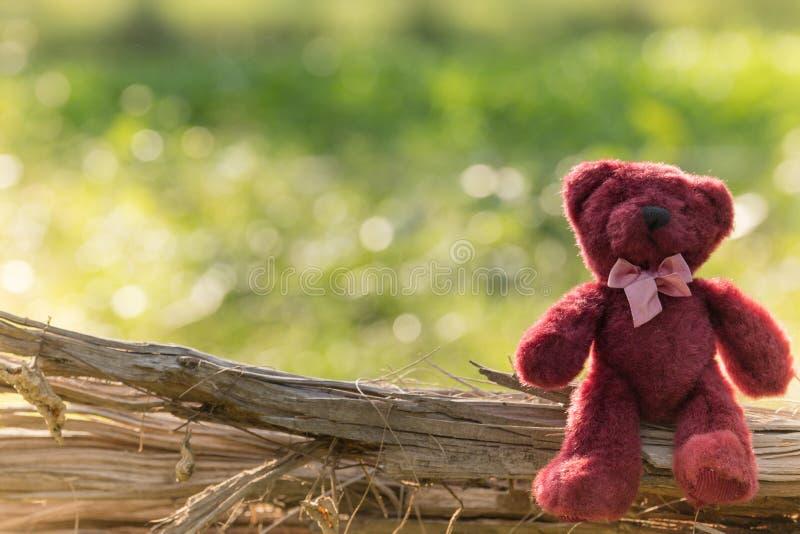 玩具熊坐偏僻在庭院里 库存照片