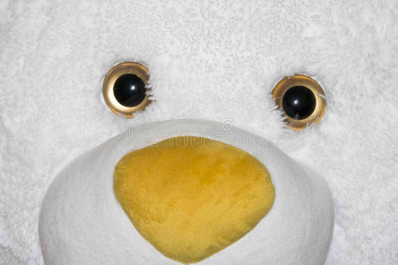 玩具熊白色面孔 免版税库存照片