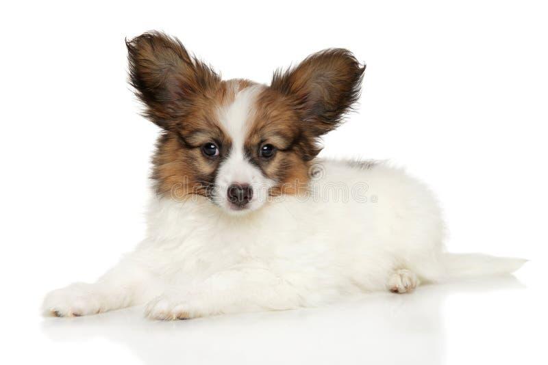 玩具说谎在白色背景的西班牙猎狗小狗 库存图片